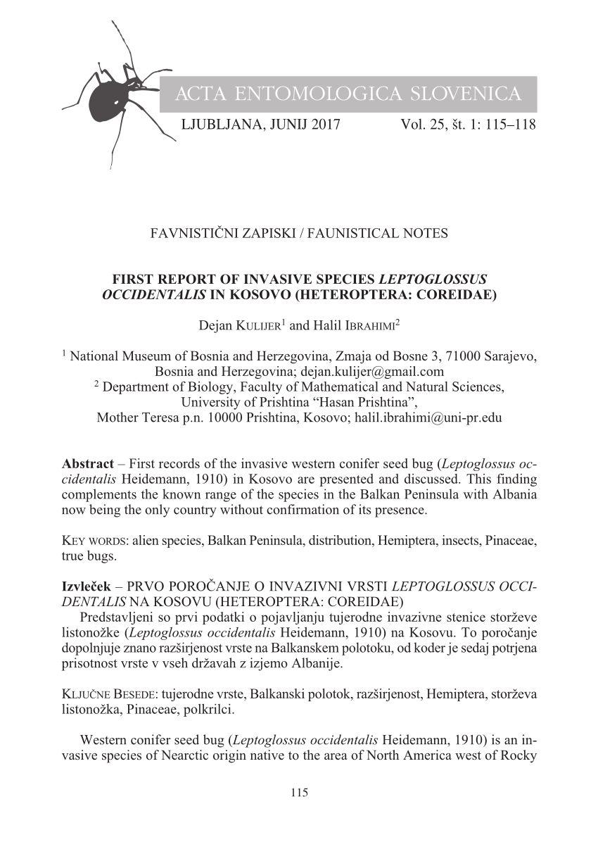 Acto Punaise De Lit Belle L Invasion orientale De Leptoglossus Occidentalis En France Bilan
