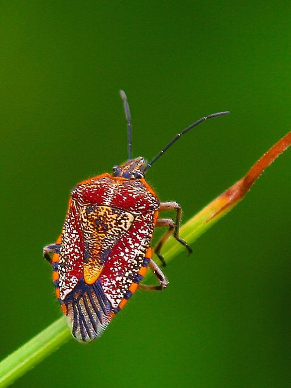 17 best insecte images on Pinterest