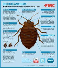 Bombe Anti Punaise De Lit Meilleur De 129 Best Bed Bugs Images