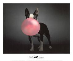 Chien Punaise De Lit Élégant Les 90 Meilleures Images Du Tableau Bubble Sur Pinterest