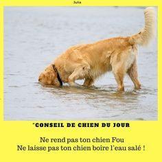 Chien Punaise De Lit Le Luxe Conseils De Chien Conseilsdechien On Pinterest