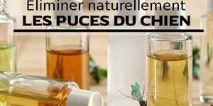 Chien Punaise De Lit Nouveau Ceremei Page 83 Sur 150