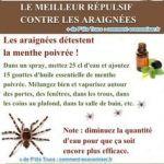 Comment éradiquer Les Punaises De Lit Fraîche Les 189 Meilleures Images Du Tableau Moustiques Sur Pinterest En
