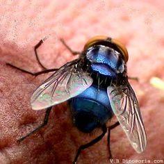 Comment éradiquer Les Punaises De Lit Unique 22 Meilleures Images Du Tableau Insects