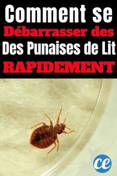 Comment Savoir Si J Ai Des Punaises De Lit Beau Tricoire Alexandratricoire1 On Pinterest