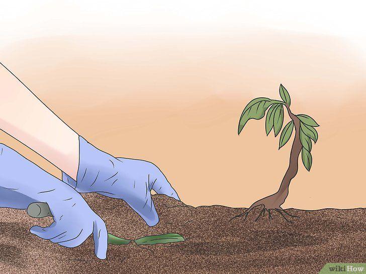 Comment Se Débarrasser De Punaise De Lit Beau 3 Mani¨res De Se Débarrasser Des Punaises De Jardin  L Extérieur