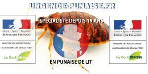Comment Se Débarrasser De Punaise De Lit Meilleur De Bug Shop Page 178 Sur 182