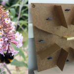 Comment Trouver Le Nid Des Punaises De Lit Beau Des Nouvelles Des Insectes Les épinlges