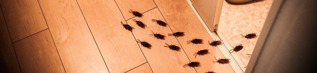 Comment Trouver Le Nid Des Punaises De Lit Belle Contrats Protection Anti Insectes Bst Aero