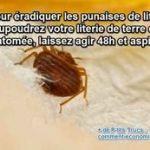 Comment Trouver Le Nid Des Punaises De Lit Élégant 147 Meilleures Images Du Tableau Living Within The Nature