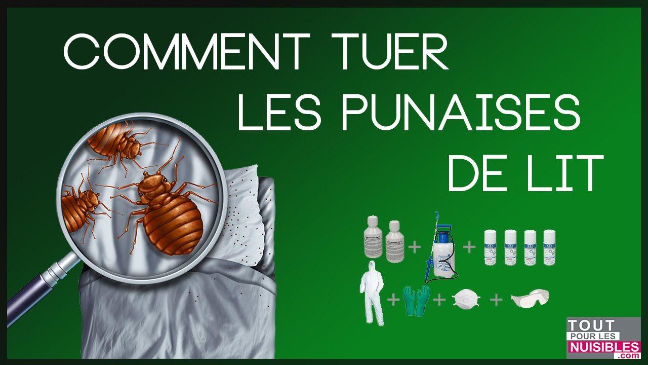 Comment Tuer Des Punaises De Lit De Luxe Ecole Sante Page 106 Sur 121