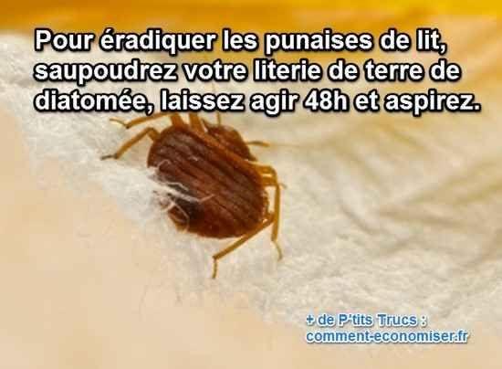Comment Tuer Des Punaises De Lit Fraîche Spray Anti Punaises De Lit Insecticide Punaise De Lit