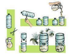 Comment Viennent Les Punaises De Lit Agréable 190 Meilleures Images Du Tableau Animaux Insectes