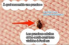 Comment Viennent Les Punaises De Lit De Luxe 190 Meilleures Images Du Tableau astuces Anti Bébªtes