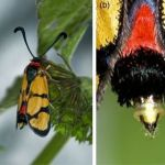 Comment Viennent Les Punaises De Lit Fraîche Entomonews Page 9
