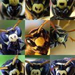 Comment Viennent Les Punaises De Lit Génial Des Nouvelles Des Insectes Les épingles De 2010