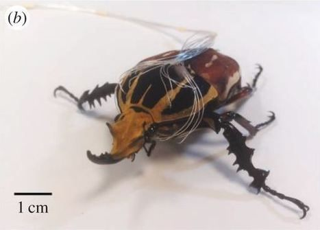 Comment Viennent Les Punaises De Lit Impressionnant Entomonews Page 9