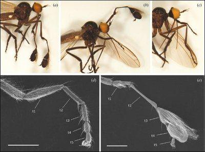 Comment Viennent Les Punaises De Lit Le Luxe Des Nouvelles Des Insectes Les épingles De 2010