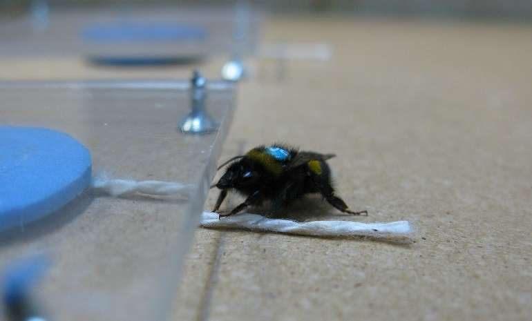 Comment Viennent Les Punaises De Lit Meilleur De Des Nouvelles Des Insectes Les épinlges