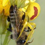 Comment Viennent Les Punaises De Lit Nouveau Entomonews Page 9