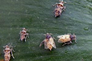Dejection Punaise De Lit Frais Des Nouvelles Des Insectes Les épingles De 2010