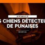Detecteur Punaise De Lit Agréable Programme Spécialisé Dans La Détection – Groupe Sister