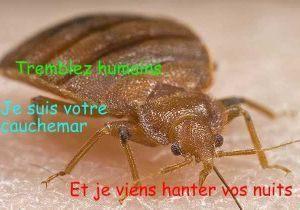 Eliminer Punaise De Lit Le Luxe Traitement Punaise De Lit Prix Pin By Bugator Traitement Punaise De