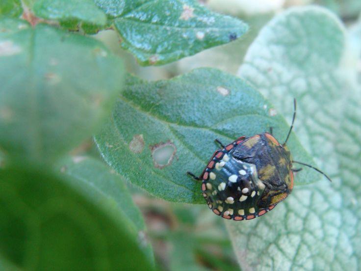 Entreprise Punaise De Lit Frais 17 Best Insecte Images On Pinterest