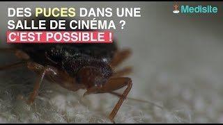 Exterminateur Punaise De Lit Paris Élégant Des Lits Dans – Hotellevictorhugo