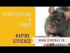 Exterminateur Punaise De Lit Paris Luxe Les 87 Meilleures Images Du Tableau Désinsectisation Sur Pinterest