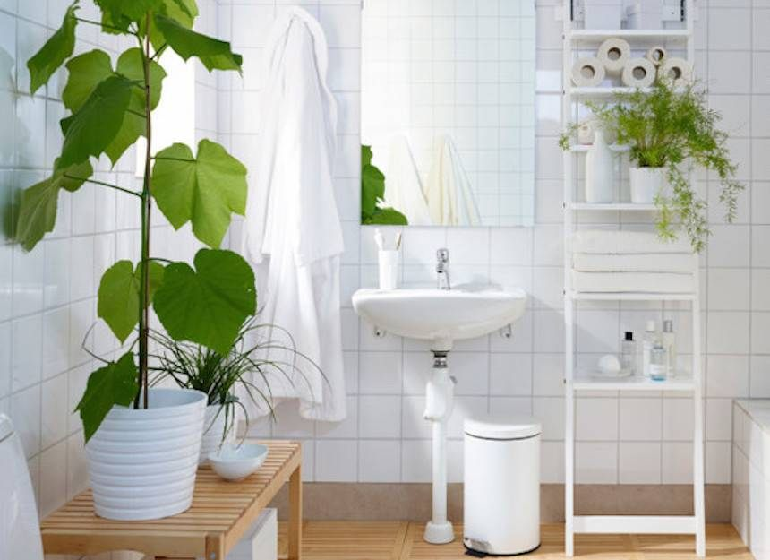 Ikea Lit Fille Fraîche 8 Shower Plants that Want to Live In Your Bathroom