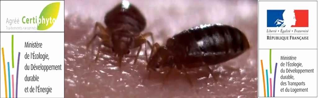 Insecticide Punaise De Lit Agréable Produit Anti Punaise De Lit Castorama Beau 70 Unique S De