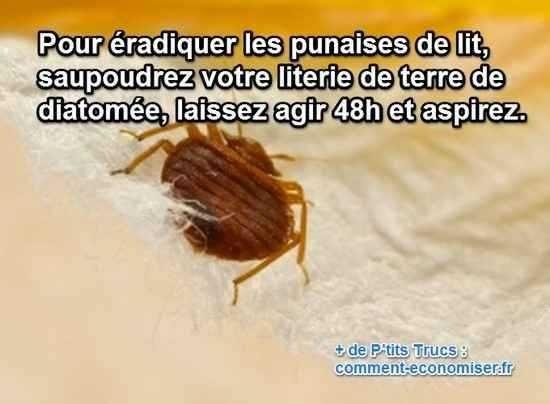 Insecticide Punaise De Lit Inspirant Puce Ou Punaise De Lit Insecticide Punaise De Lit