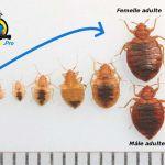 Insecticide Punaise De Lit Pharmacie De Luxe Larve De Puce De Lit Anti Punaise De Lit Beau Punaises De Lit Beau