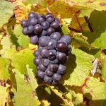 Lit 2 Places Noir Impressionnant Pinot Noir