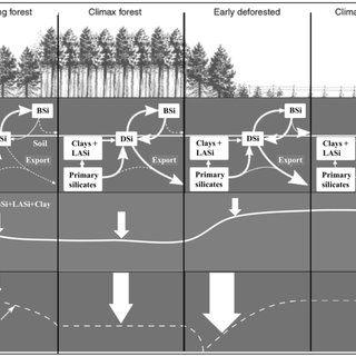 Lit Bébé Combiné Beau Pdf Silicon Regulation Of soil organic Carbon Stabilization and Its