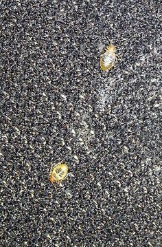 Nid De Punaise De Lit Fraîche Bug Bugbusters Bugbusters On Pinterest