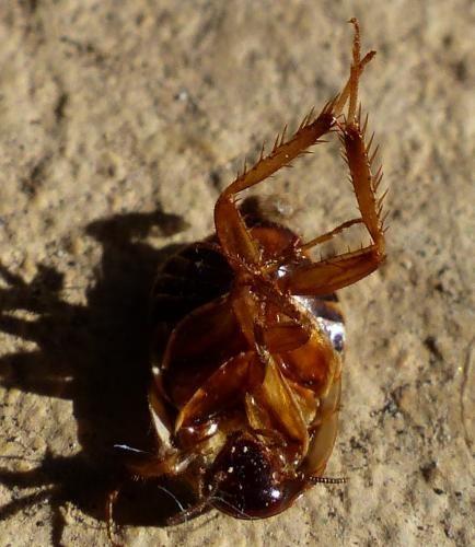 Oeuf De Punaise De Lit Unique Insecte Puce Archives Page 44 Sur 59 Ecole Sante