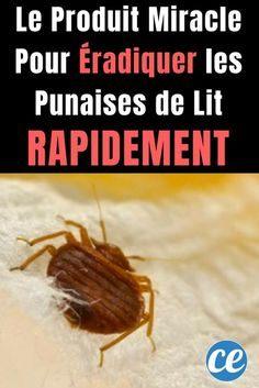 Oeuf Punaise De Lit De Luxe Insecte De Lit Punaise De Jardin Luxe Acivil Home Conception De