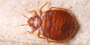 Oeuf Punaise De Lit Frais Bug Shop Page 178 Sur 182
