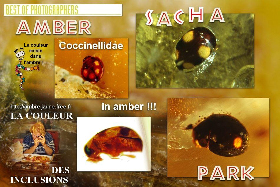 Ou Se Cache Les Punaises De Lit De Luxe Grillons Ambre Sacha Liste Des Posters