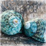 Parure De Lit Garçon Fraîche Rosemary Hill Petey129 On Pinterest