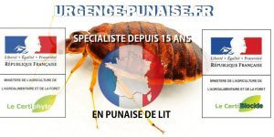 Photo Oeuf De Punaise De Lit Belle Bug Shop Page 178 Sur 182