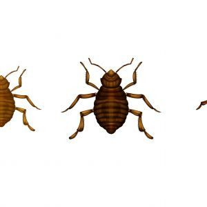 Insecte Du Lit Insecte De Lit Housse Matelas Punaise De Lit Galerie