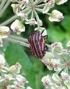 Photo Punaise De Lit Le Luxe Insecte Du Lit Insecte De Lit Roi Matelas Unique Matelas Massage 0d