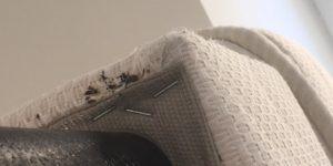 Piqure Acarien Ou Punaise De Lit Élégant Bug Shop Page 178 Sur 182