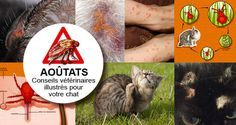 10 meilleures images du tableau Ao tats chez le chat en 2019