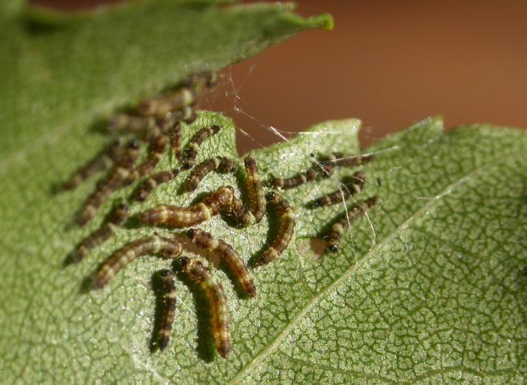 Des nouvelles des insectes les épinlges