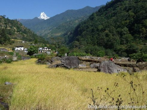 Prédateur Punaise De Lit De Luxe 尼泊尔16天之旅 美丽的山国 遇上你是我的缘 五