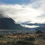 Prédateur Punaise De Lit Joli 下一个参观景点是千层薄饼岩punakaki